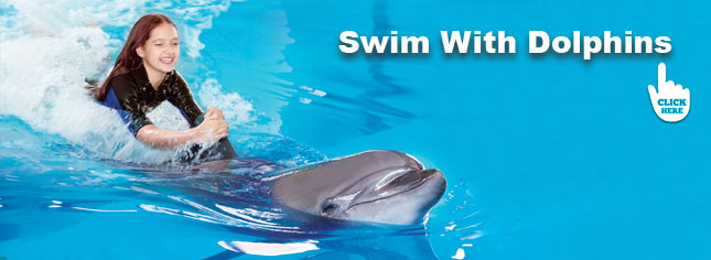 swim with the dolphins in dubai